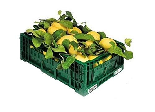 ZITRONEN NICHT BEHANDELT – Garantiertes Schalen-essbares – Digital-Garten BIO – Produkte in Kalabrien – ITALIEN (18)