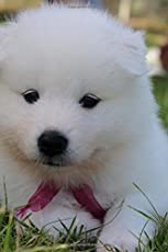 Adorable White German Spitz Puppy Dog Lined Journal