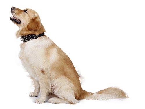 JIALUN-Haustier Mode Multicolor Leder Welpen Haustier Hundehalsband Cat Neck Strap Halskette Pet Halskette ( Color : Black , Size : L ) (Black Pitbull-t-shirts)