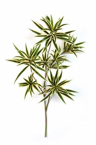 artplants – Deko Dracaena Reflexa Zweig, gelb-grün, 70 cm – Kunstzweig/Künstliche Drachenbaum Blätter
