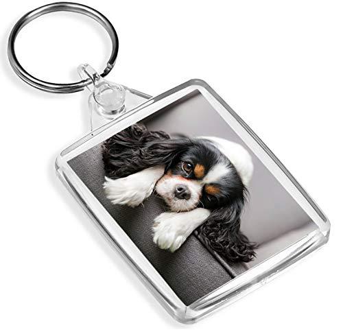 Cavalier King Charles Spaniel Schlüsselanhänger Hundewelpe Nettes Haustier-Tier-Geschenk # 12388 -