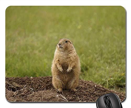 Gaming-Mauspads, Mauspad, Black Tailed Prairie Dog Wildlife Nature Wilderness - Black-tailed Prairie Dog