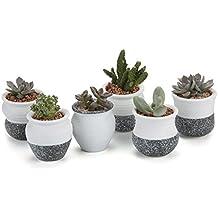 T4U Conjunto de 6 Juego de cerámica Mini Corea Estilo Snow Juego completo en serie Cerámicos Planta Maceta Suculento Cactus Planta Maceta Planta Contenedor Vivero Maceta Macetas de jardín Macetas Envase