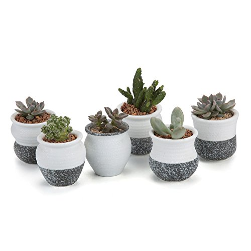 t4u-mini-coree-style-neige-serie-plein-ensemble-ceramique-pot-plante-recipient-pepiniere-pots-succul