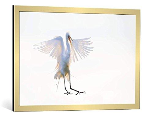 kunst für alle Bild mit Bilder-Rahmen: Phillip Chang Morning Landing - dekorativer Kunstdruck, hochwertig gerahmt, 90x60 cm, Gold gebürstet