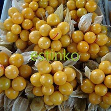 Galleria fotografica 20pcs / lot Oro Berry Semi Delicious frutta cinese Lattern impianto Casa giardino bonsai pianta facile crescere i semi della frutta