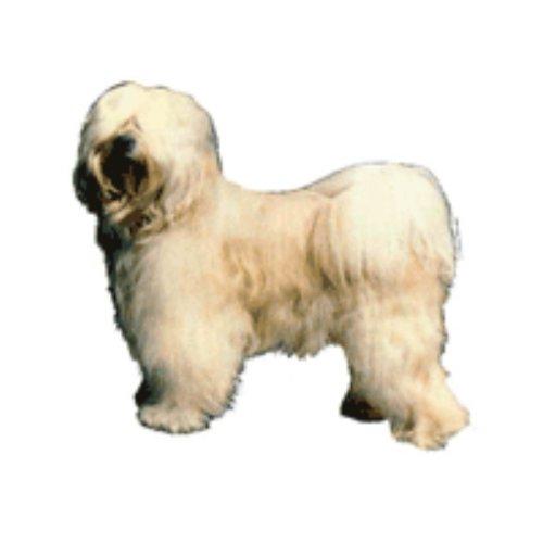 World Stickers Schwandt Heimtierbedarf 13152 Aufkleber 2 Stück ca. 140 x 160 mm für Warnschild Tibet Terrier stehend -