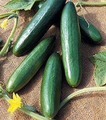 bobby-seeds-gurkensamen-la-diva-portion