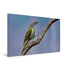 Calvendo Premium Textil-Leinwand 120 cm x 80 cm Quer, Grauspecht | Wandbild, Bild auf Keilrahmen, Fertigbild auf Echter Leinwand, Leinwanddruck Tiere Tiere