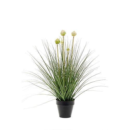 Allium Gras Grünpflanze im Topf weiß grün mit Blüten H. 53cm ()