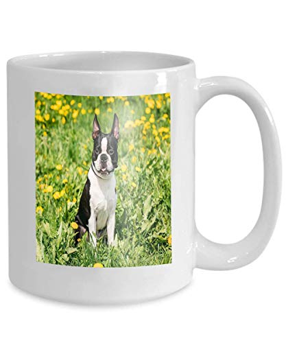 Coffee Tea Mug Cup Funny Young Boston Bull Terrier Dog Outdoor Green Spring Meadow Yellow Flowers Playful pet Outdoors 110z - Spring Meadow Green