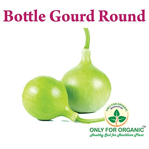 Only for Organic ! Hybrid Bottle Gourd Round Seeds : 10 Seeds !