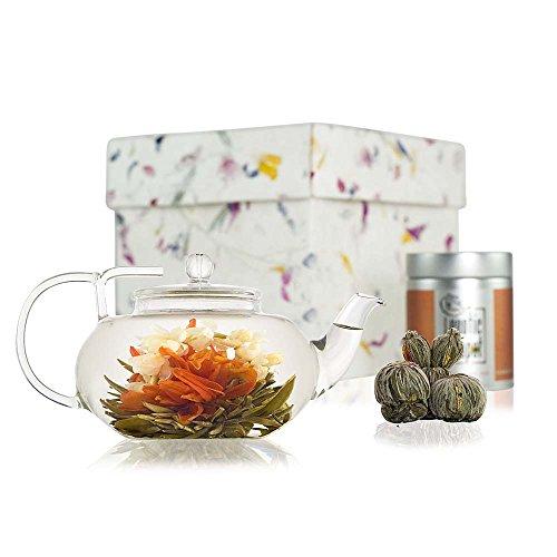 The Exotic Teapot - Flowering Tea Gift Set, Lotus Glass Teapot (400ml), 5 Bloom Sampler Tin of Flower Tea, Handmade Gift Box