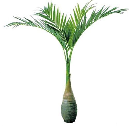 KINGDUO 20 Pcs Bouteille Palm Graines Bonsai Tropical Ornemental Arbre Plante Les Graines Jardin Exotique Plantation-Vert Foncé