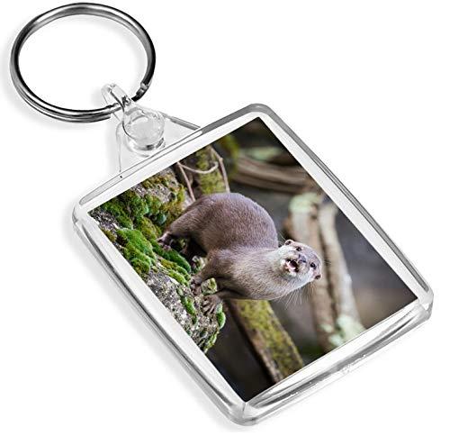 #16431 Schlüsselanhänger, orientalischer Otter - IP02 - Wild Animal Asia Nature
