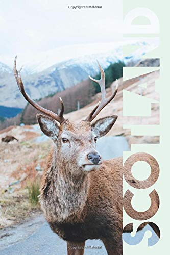 Scotland: Scottish Stag Cool Composition Book Notebook Journal Diary for Men, Women, Teen and Kids for notes on Traveling to Scotland for the First Time