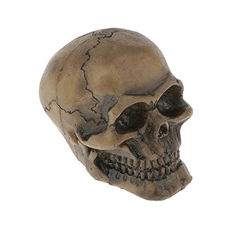 Sharplace Terrarium Aquarium Dekoration , Menschlichen Schädel Modell mit Höhle