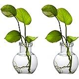 MITHILA Glass Vase,Money Plants jar Set of 2