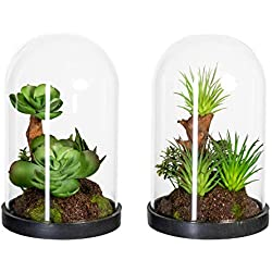 Homefinity 2er Set künstliche Sukkulentenarrangement 15cm grün in Glaskugel ca. 9 x 15 cm