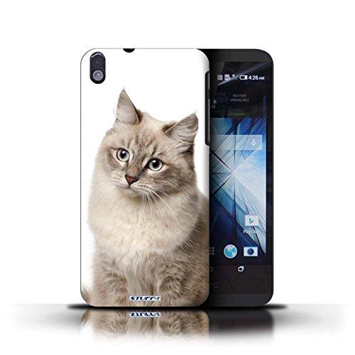 Kobalt® Imprimé Etui / Coque pour HTC Desire 816 / Scottish Fold conception / Série Espèces de chats Sibérien