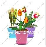 Grosses soldes!100 Pcs Rare Mini Tulip Graines Coloré Graines De Fleurs De Haute Qualité Fleur Bonsai Graines Mini Bonsaï Plante Pour La Maison Jardin
