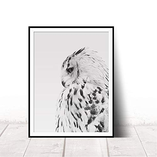 Adgkitb canvas White Owl Print Photo Portrait Animal