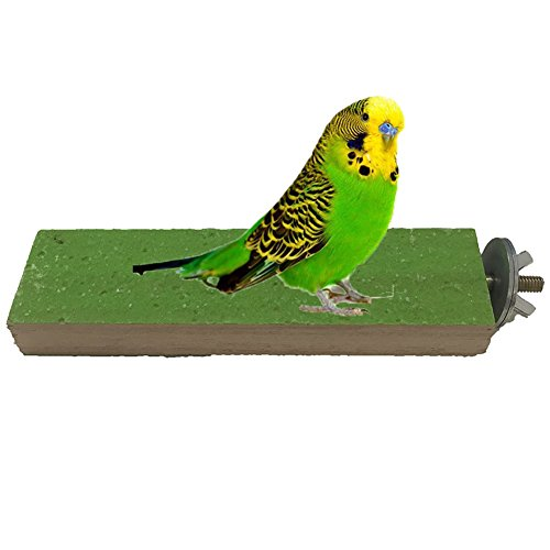 Wood Perch for Bird Parrot Macaw African Greys Budgies Parakeet Cockatiels Conure Lovebird Finch Canaries Cage Shelf Toy