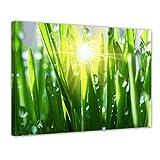 Bilderdepot24 Kunstdruck - Gras II - Bild auf Leinwand - 70x50 cm Einteilig - Leinwandbilder - Bilder als Leinwanddruck - Wandbild