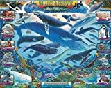 Best White Mountain Friends Puzzle Pieces - White Mountain Puzzles Whales and Friends 1000 Piece Review