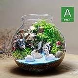 Fash Lady Landschaftsmoosmikro-Topfpflanzen und kreatives Geschenk Hayao Miyazaki Chinchillas-Reihe von Kleinen grüNEN Glasdekorationssamen nur