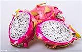 Shopmeeko 200pcs / bag seltene mischungsfarben pitaya pflanze, drachenfruchtpflanze, sehr schöne obstpflanze, gesendetes geschenk: 3