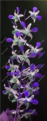 ! Nain Dendrobium Graines de fleurs d'orchidées rares plantes tropicales ornementales Arbre miniature croissance naturelle, 10 Pcs 9