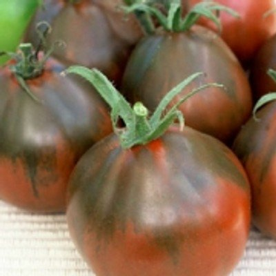 Dunkelbraune Tomate in Birnenform - exzellenter Geschmack - Black Pear - 20 Samen