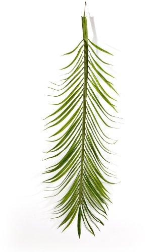 Set 2 x Deko Phönix Palmwedel-Set, 18 Stück, 165 cm – Künstliche Wedel / Deko Palme – artplants