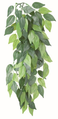 Trixie 76240 Seiden-Hängepflanze, Ficus