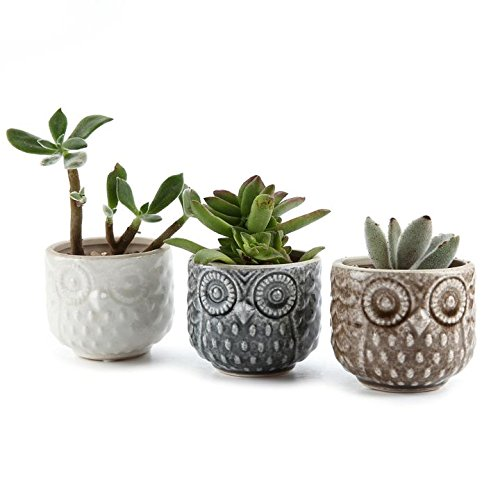 t4u-7cm-ceramic-owl-pattern-sucuulent-plant-pot-cactus-plant-pot-flower-pot-container-planter-full-c