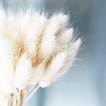 Begorey Garten Bunny Tails Samen Hasenschwanz-Gras Selten Ziergras Samtgras Grassamen Saatgut winterhart