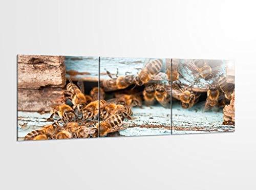 Acrylglasbilder 3 Teilig 150x50cm Bienen Bienenstock Biene Honig Tier_ Acrylbild Bilder Acrylglas Wand Bild Kunstdruck 14?5347, Acrylglas Größe 6:BxH Gesamt 150cmx50cm