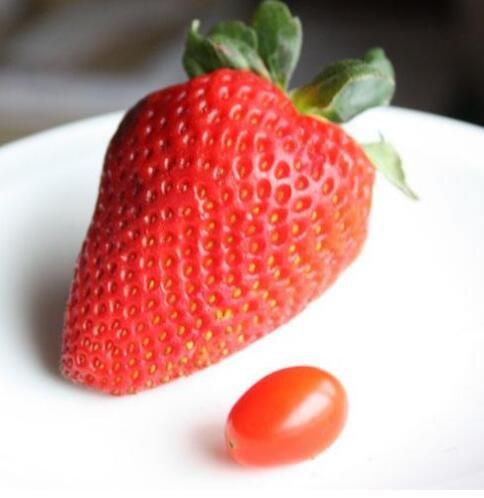 500pcs / sac graines de fraises fraises géant graines de fruits bio légumes pot bonsaï non-OGM pour les semences de plantes de jardin à la maison 5