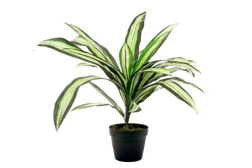 McPalms Drachenbaum Dracaena 50 cm künstlich Kunstpflanze