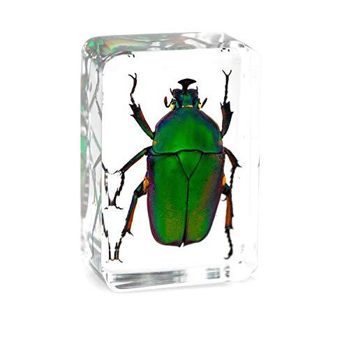 WEIUR Echt Insekt Probe Briefbeschwerer Harz Präparatoren Smaragd-Skarabäus Kupfer Blume Skarabäus Gebogener Smaragd-Skarabäus Didaktik Der Biowissenschaften,3