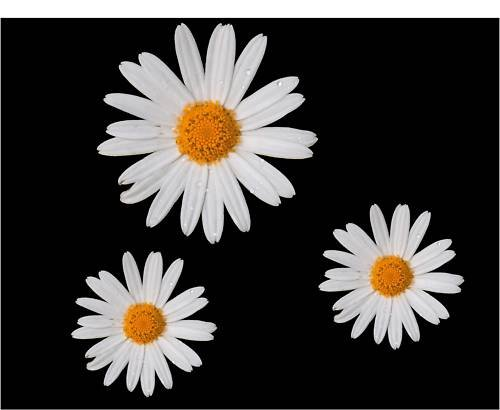 3-x-daisy-flower-carcamper-van-mirror-stickers-decals