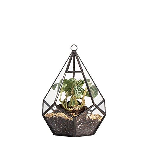 NCYP Moderne Artistic Transparent Zum Aufhängen Air Übertopf Reißfestigkeit Diamant Glas Geometrische Terrarium, Farblos, S