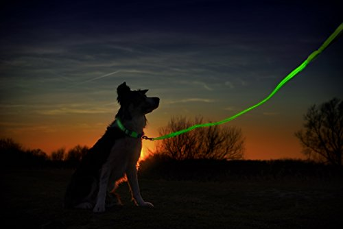 Illumiseen LED Dog Collar - USB Rechargeable - Your Dog Will Be More Visible & Safe - 6 Colours (Red, Blue, Green, Pink, Orange & Yellow) and 4 Sizes - Perfect To Use With Our Matching Lead 6