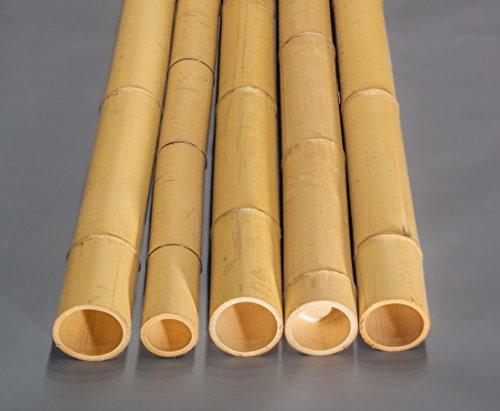 Bambusrohr Moso Mit 100cm Gelblich Durch 98 Bis 12cm Gebleicht