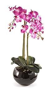 Peony 6024 Phalaenopsis Orchidea in vaso, tondo, ceramica, nero