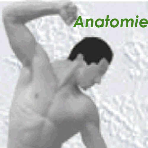 Anatomie (kleines Kompendium der Physiotherapie 3)