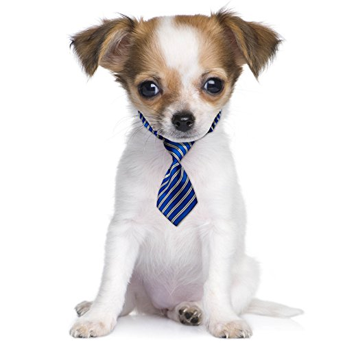 ft Schule Business Fancy Kleid süsse Haustier Hund Katze Mini Hals Krawatte (Prep School Kostüm)