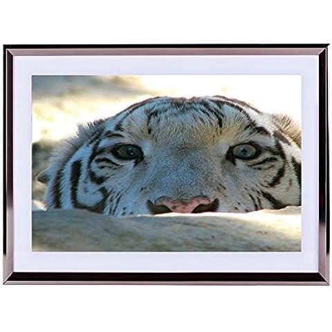 Arte–plateado de pared marco de madera imagen–Peek A Boo tigre siberiano Edition 16x 12pulgadas