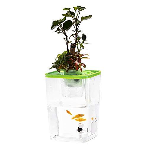 Lembeauty Pescado Verduras simbiótico Agua Hierba